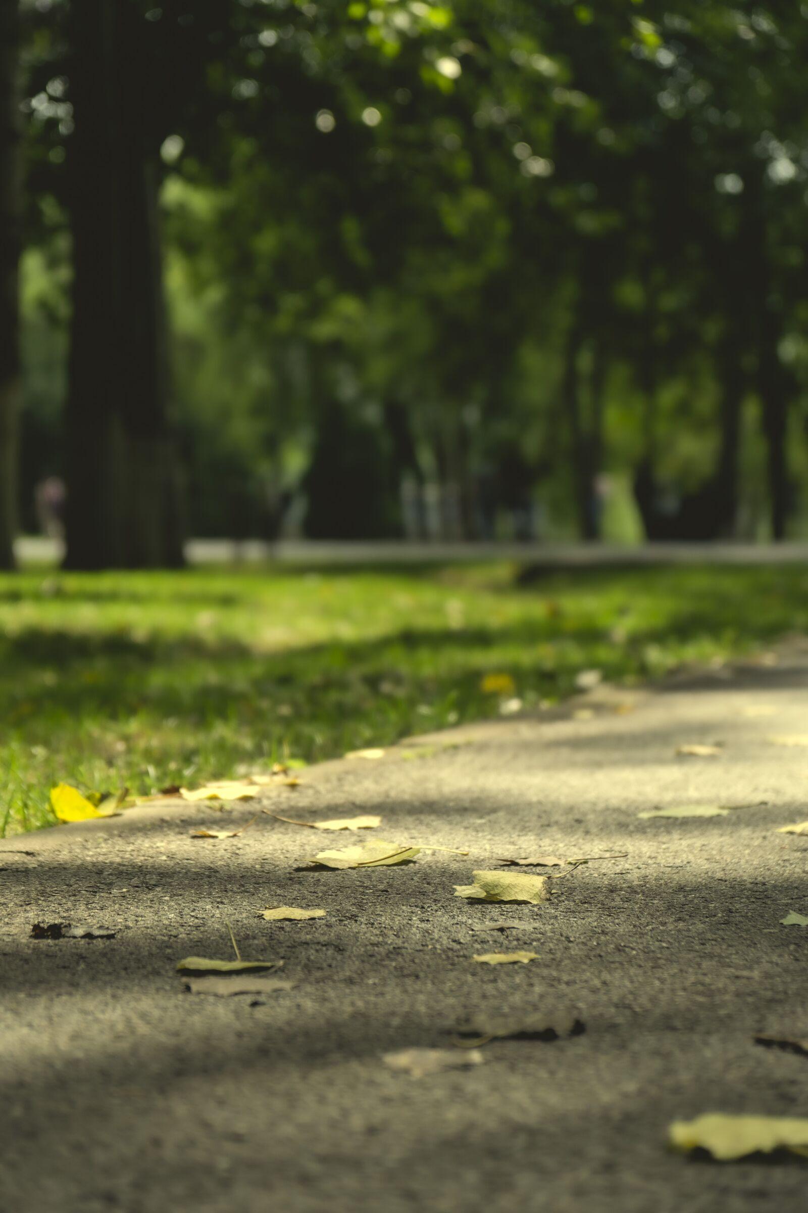 "Sony a6300 sample photo. ""Landscape, park, road"" photography"
