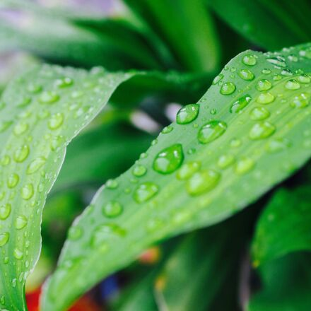 rain, garden, autumn leaves, Canon EOS KISS X5