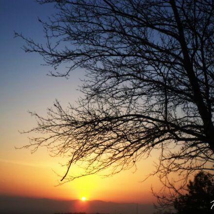 nature, shadow, sun, tree, Sony DSC-S5000