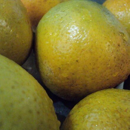 oranges, up-close, fruit, plants, Sony DSC-S2000