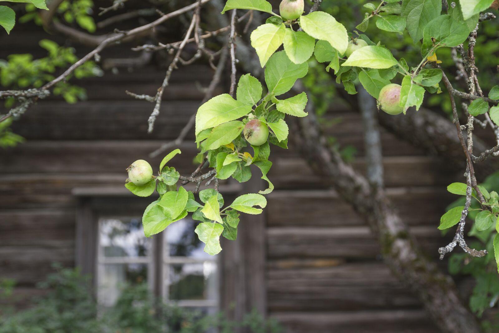 "Canon EOS 7D sample photo. ""Apple tree, apple, tree"" photography"