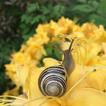 snail, garden, nature, Apple iPhone 6s