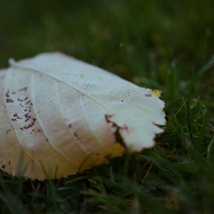 grass, leaf, leaves, shallow, Nikon D5100