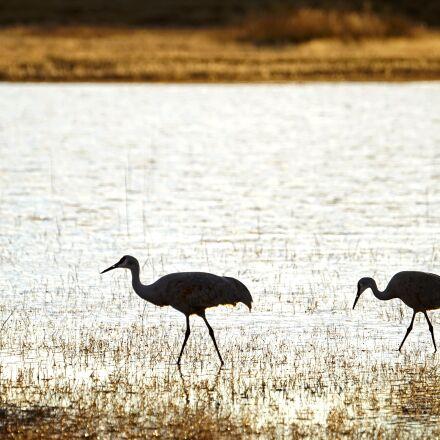 cranes, birds, silhouette, Sony ILCE-7M2