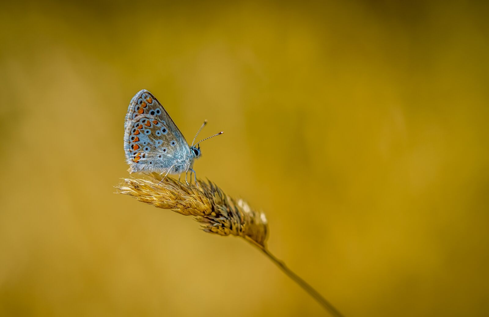 """Sony a6000 sample photo. """"Butterfly, summer, nature"""" photography"""