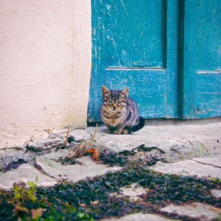 cat, kitten, pet, Canon EOS 550D