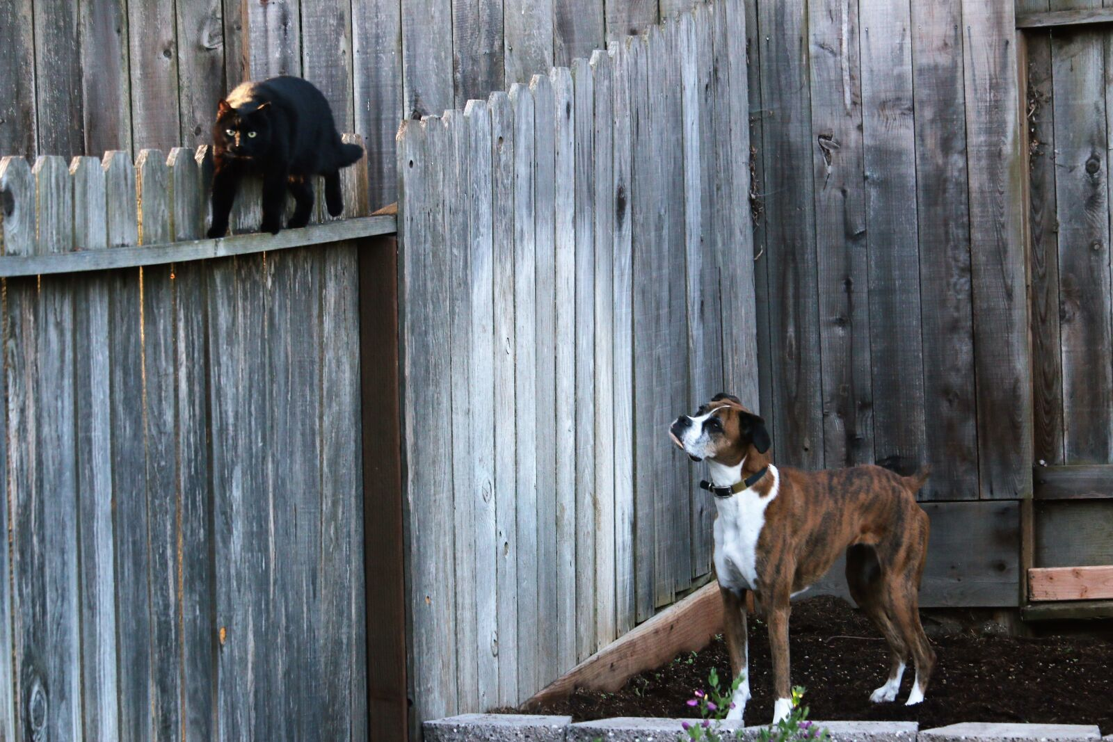 "Canon EOS 70D sample photo. ""Dog, cat, pet"" photography"