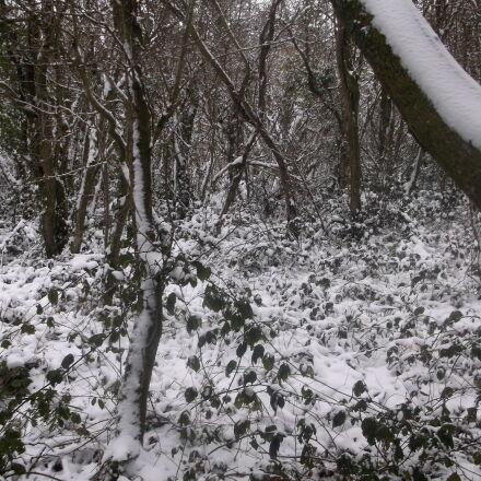 christmas, cold, snow, trees, Fujifilm FinePix AX550