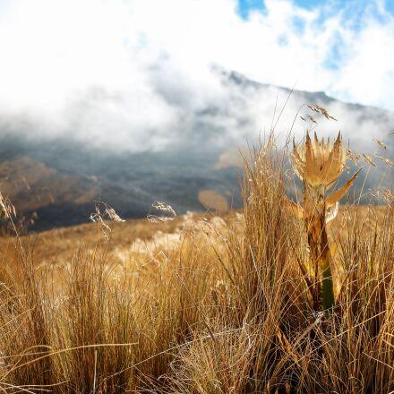 landscape, flower, mexico, Canon EOS REBEL T6S
