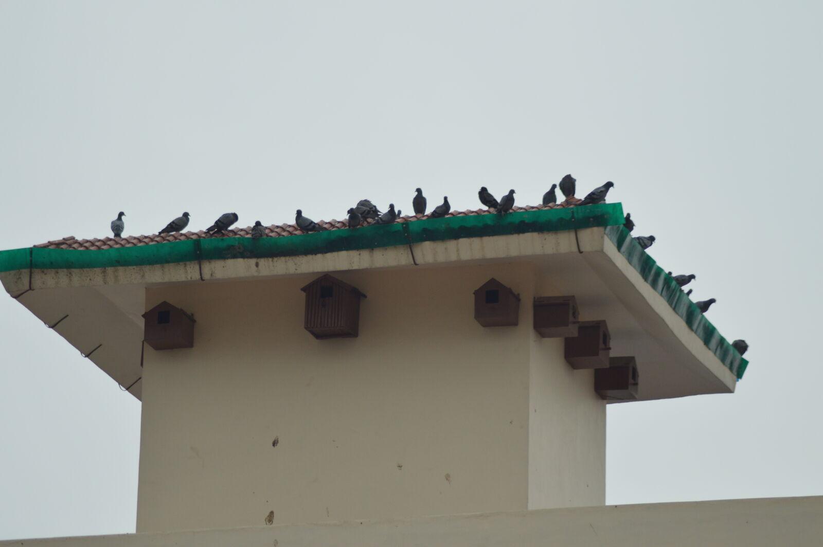"Nikon D3200 sample photo. ""Birds"" photography"