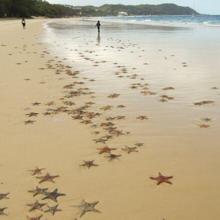 starfish, beach, Fujifilm FinePix F30
