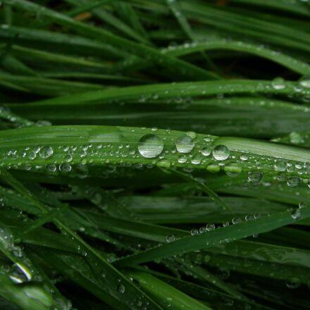 drop, grass, fresh, Sony DSC-T70