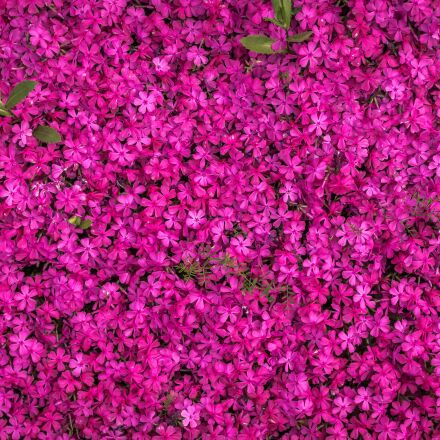 flowers, spring, spring flowers, Sony NEX-5N