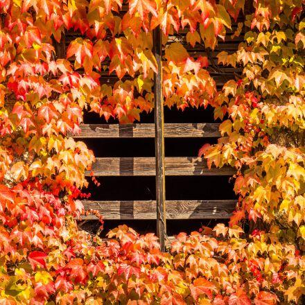 autumn, leaves, nature, Panasonic DMC-GH4