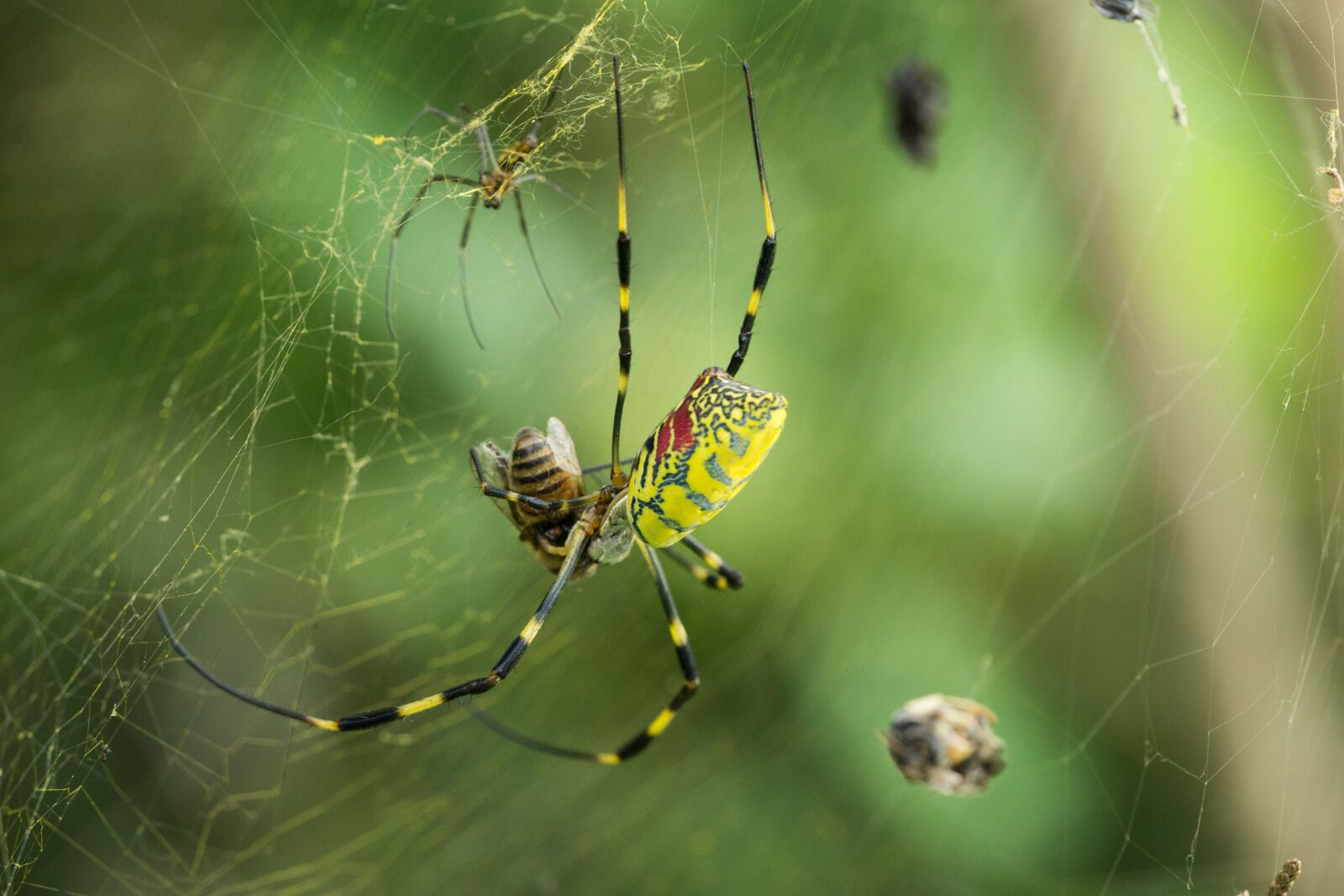 """Sony a6000 sample photo. """"Spider, spider web, macro"""" photography"""