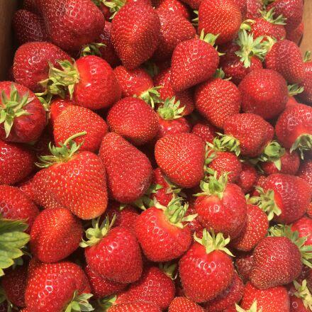 strawberry, fruit, harvest, Apple iPhone 6s