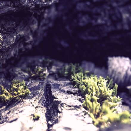 cave, rock, wood, Sony ILCE-6000