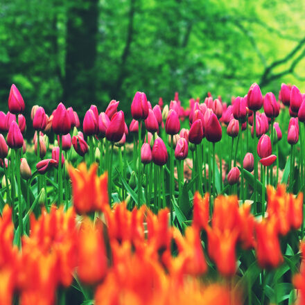 orange, and, pink, flowers, Canon EOS 60D