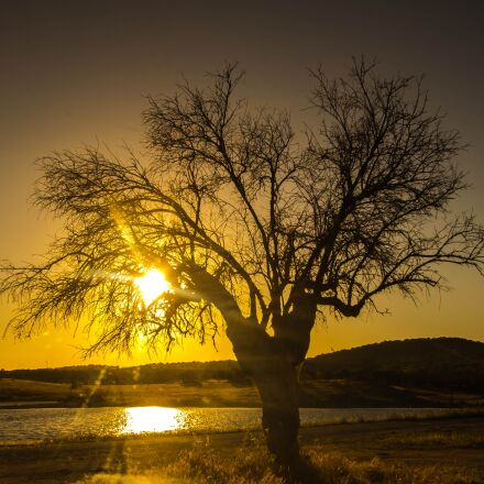 sunset, tree, lake, Canon EOS 60D