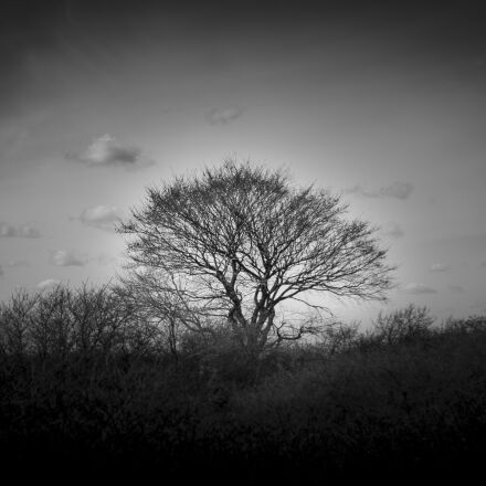 365xphoto, Canon EOS 6D