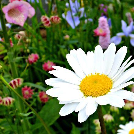 flowers, garden, colorful, colourful, Fujifilm FinePix F900EXR