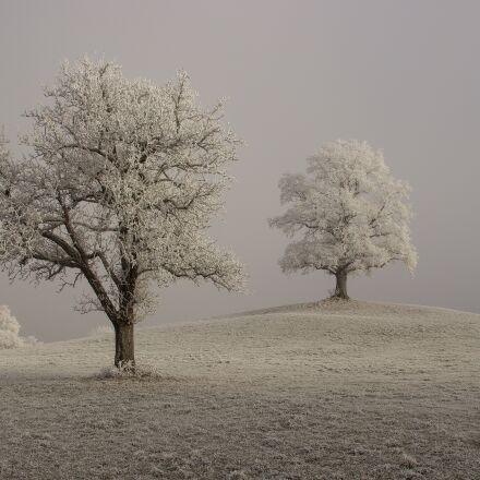 hoarfrost, winter, branches, Canon EOS 600D