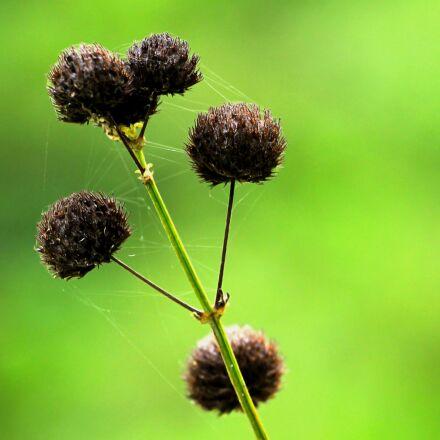 grass, wild, nature, Canon EOS 60D