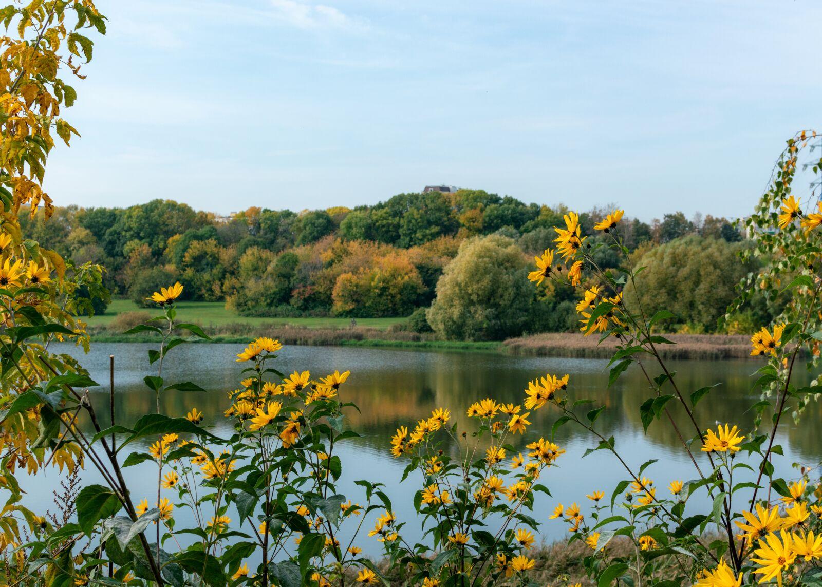 "Nikon D3200 sample photo. ""Lake, pond, jerusalem artichokes"" photography"