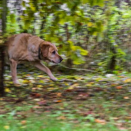 autumn, dog, garden, park, Canon EOS 7D