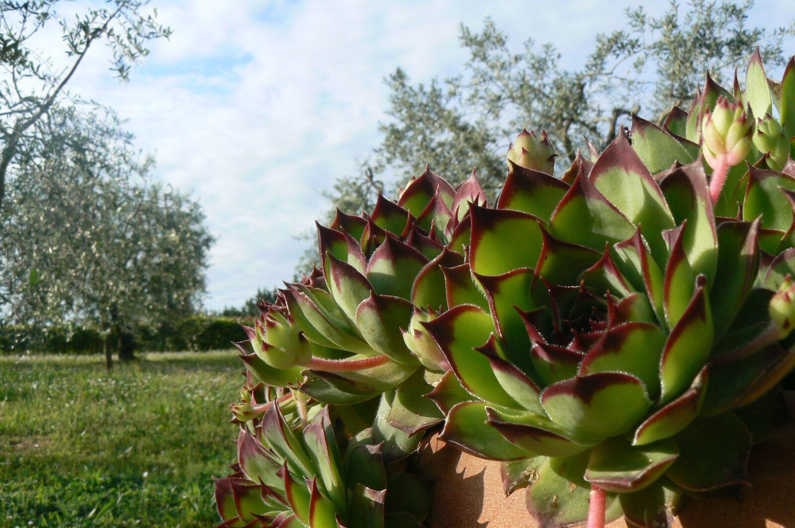"Panasonic DMC-FZ7 sample photo. ""Flora, nature, leaf"" photography"