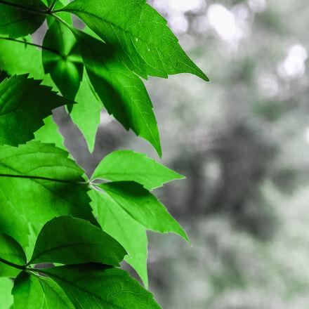 bokeh, green, leaves, Canon EOS 7D