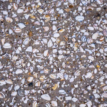 beach, sand, shells, Canon EOS 6D