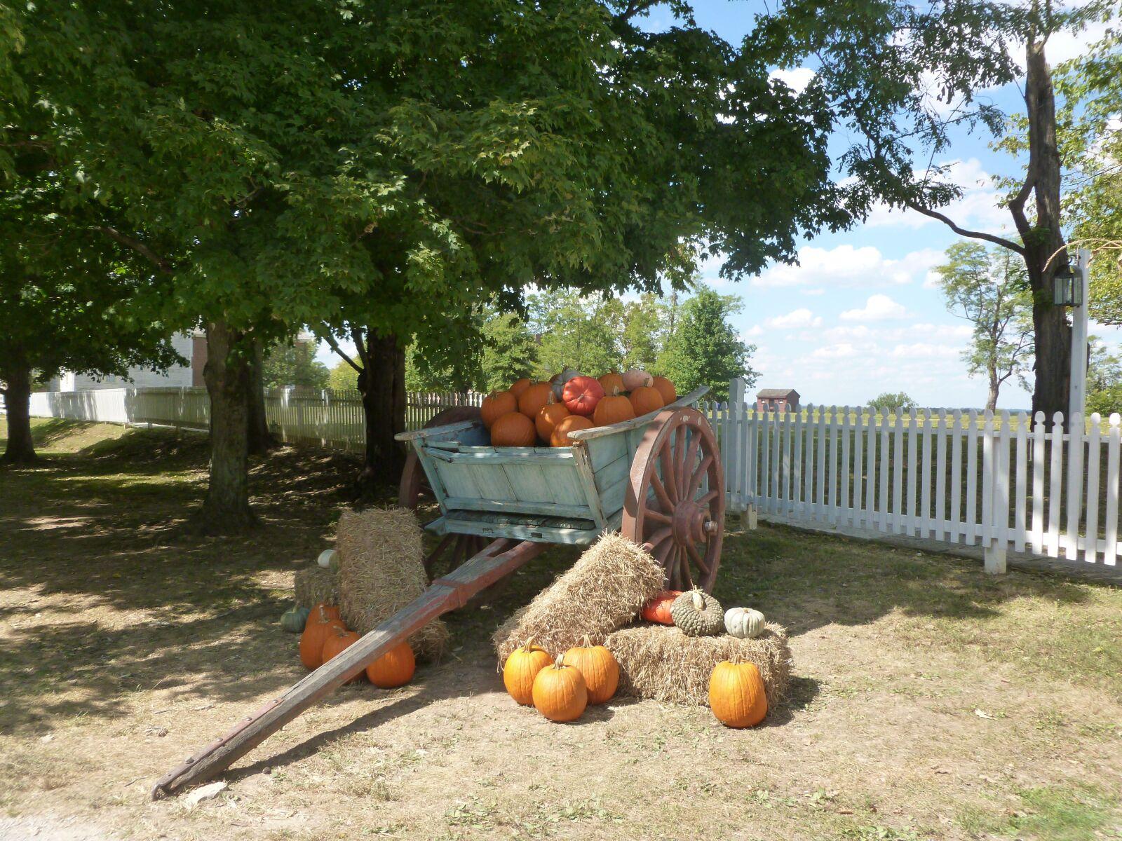 "Panasonic DMC-FH27 sample photo. ""Fall, pumpkins, autumn"" photography"