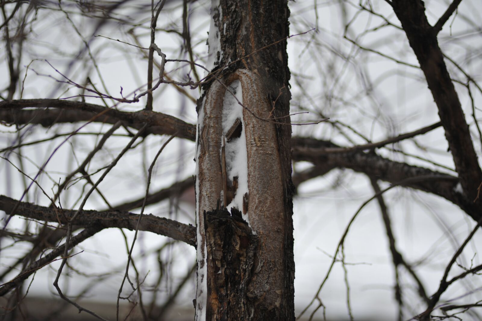 """Nikon D700 sample photo. """"Winter, forest, branch"""" photography"""