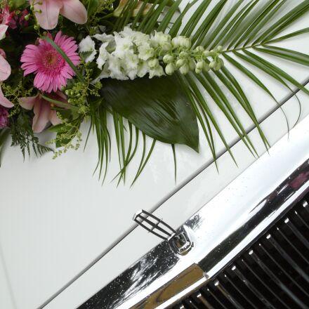 flowers, auto, car bonnet, Panasonic DMC-L1