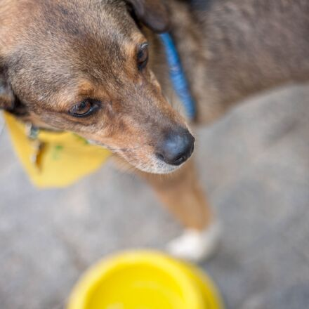 dog, volunteer, pet, Canon EOS 5D