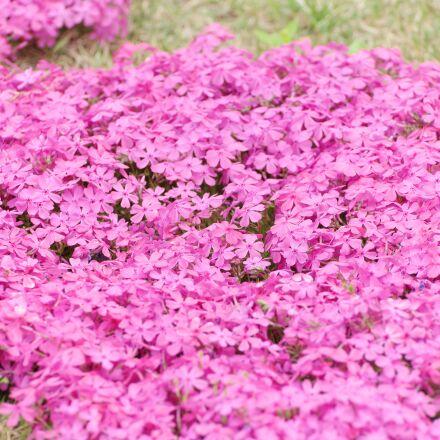 flowers, flower, spring, Samsung NX1