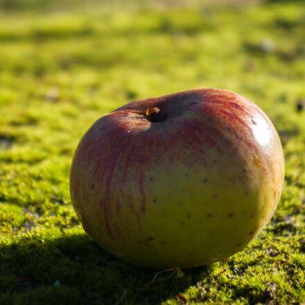 apple, fruit, moss, Pentax K10D