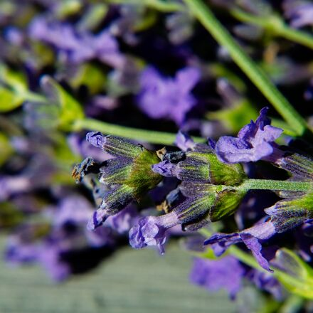 lavender, macro, blossom, Nikon 1 V2