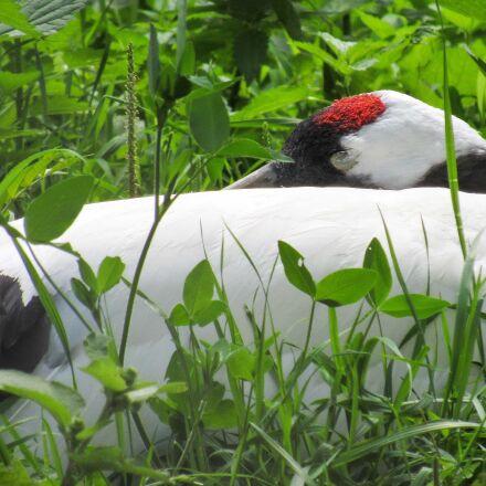 green grass, bird, nature, Canon POWERSHOT SX520 HS