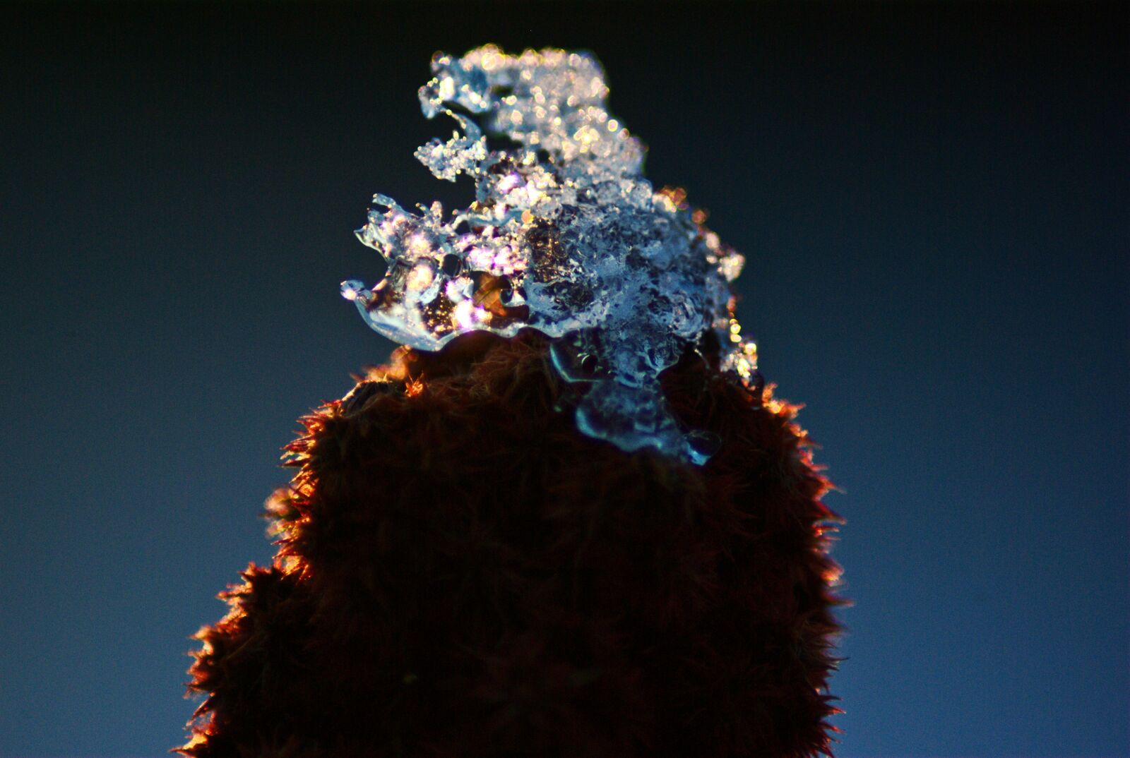 """Pentax K10D sample photo. """"Crystals, ice, flower"""" photography"""