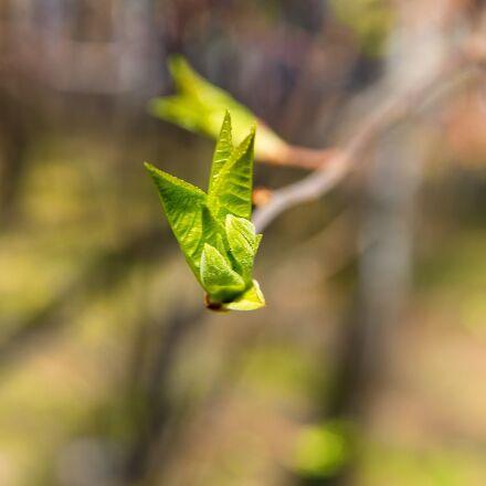 spring, sheet, branch, Pentax K-500