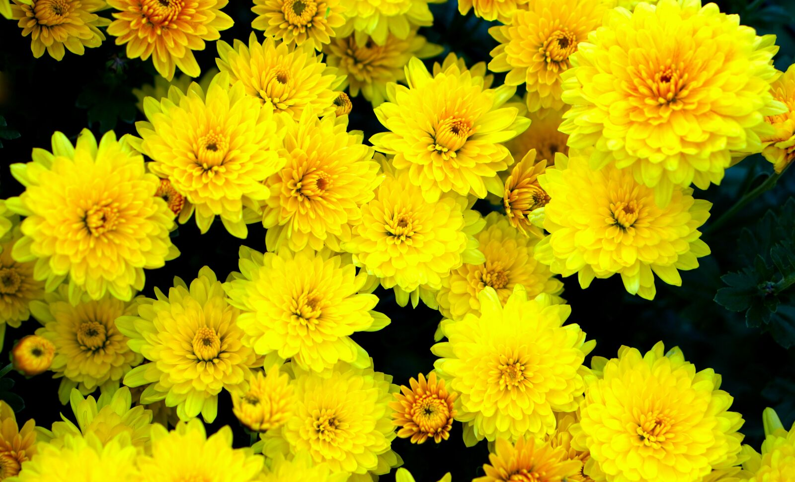 """Sony a6400 sample photo. """"Flowers, yellow, blossom"""" photography"""