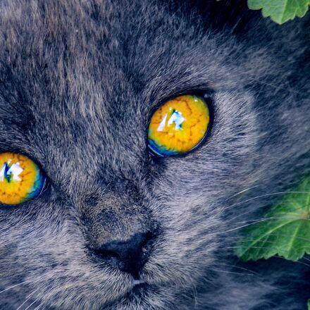 bright eyes, kitten, cat, Nikon COOLPIX L330