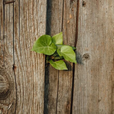 carpentry, fence, green leaves, Canon EOS 5D MARK III