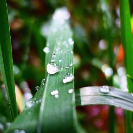 a drop of, grass, Panasonic DMC-FS62