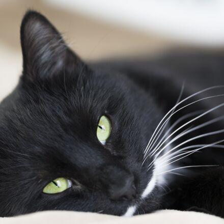 cat, bed, cozy, Sony NEX-5N