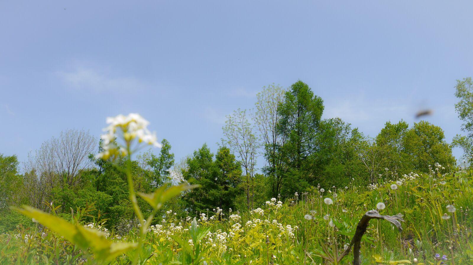 white flower, blue sky