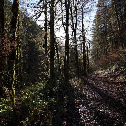 forest, shadow, tree, trees, Nikon D750