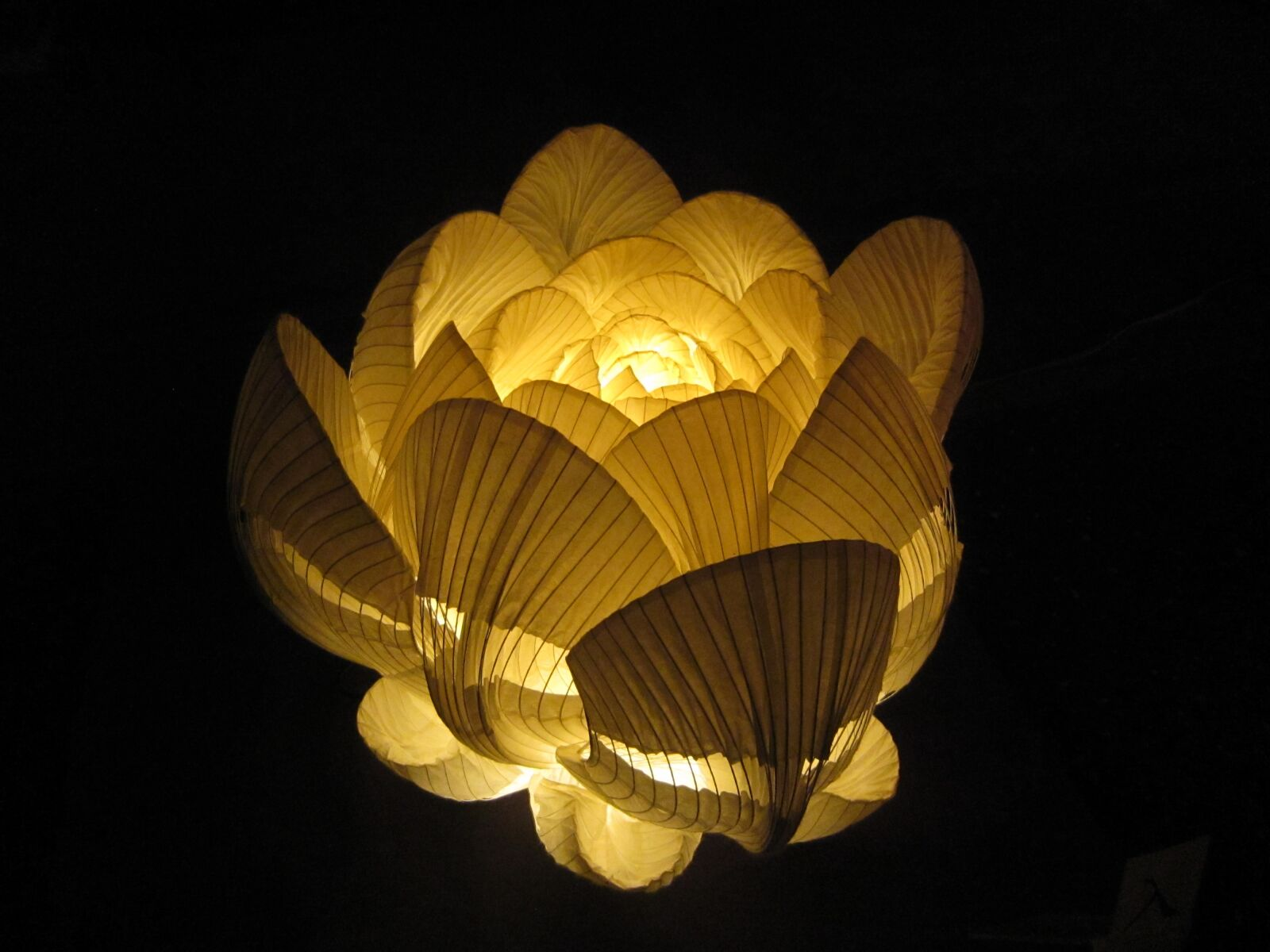 flowers, lamp, japanese paper